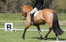 Breathing Legs Jane Savoie Dressage